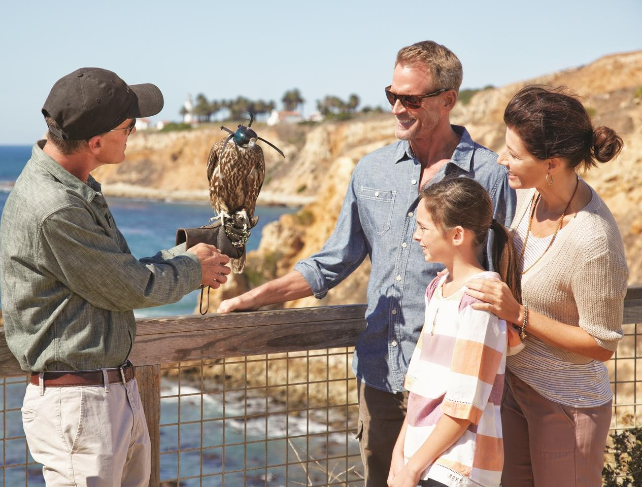 Falconry at Terranea