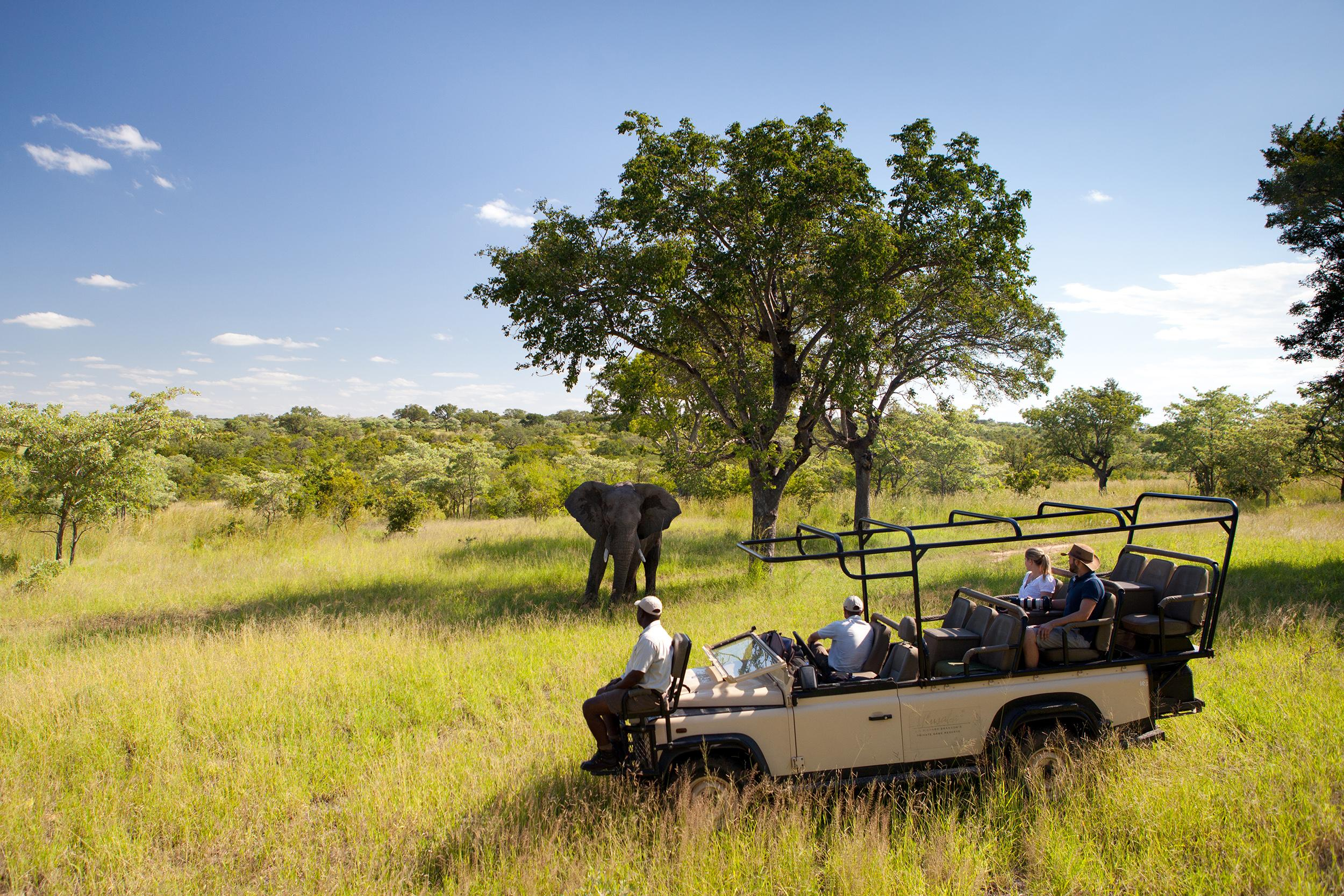 Ulusaba Game Drive