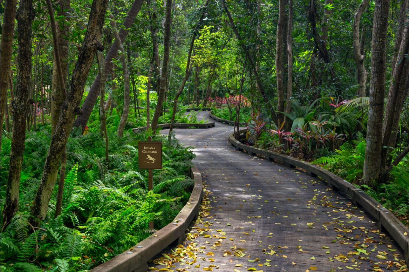 Immerse in our Nature Hiking Trail